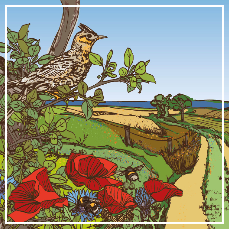 Illustrationen und Layout: Broschüre zur EU-Agrarpolitik