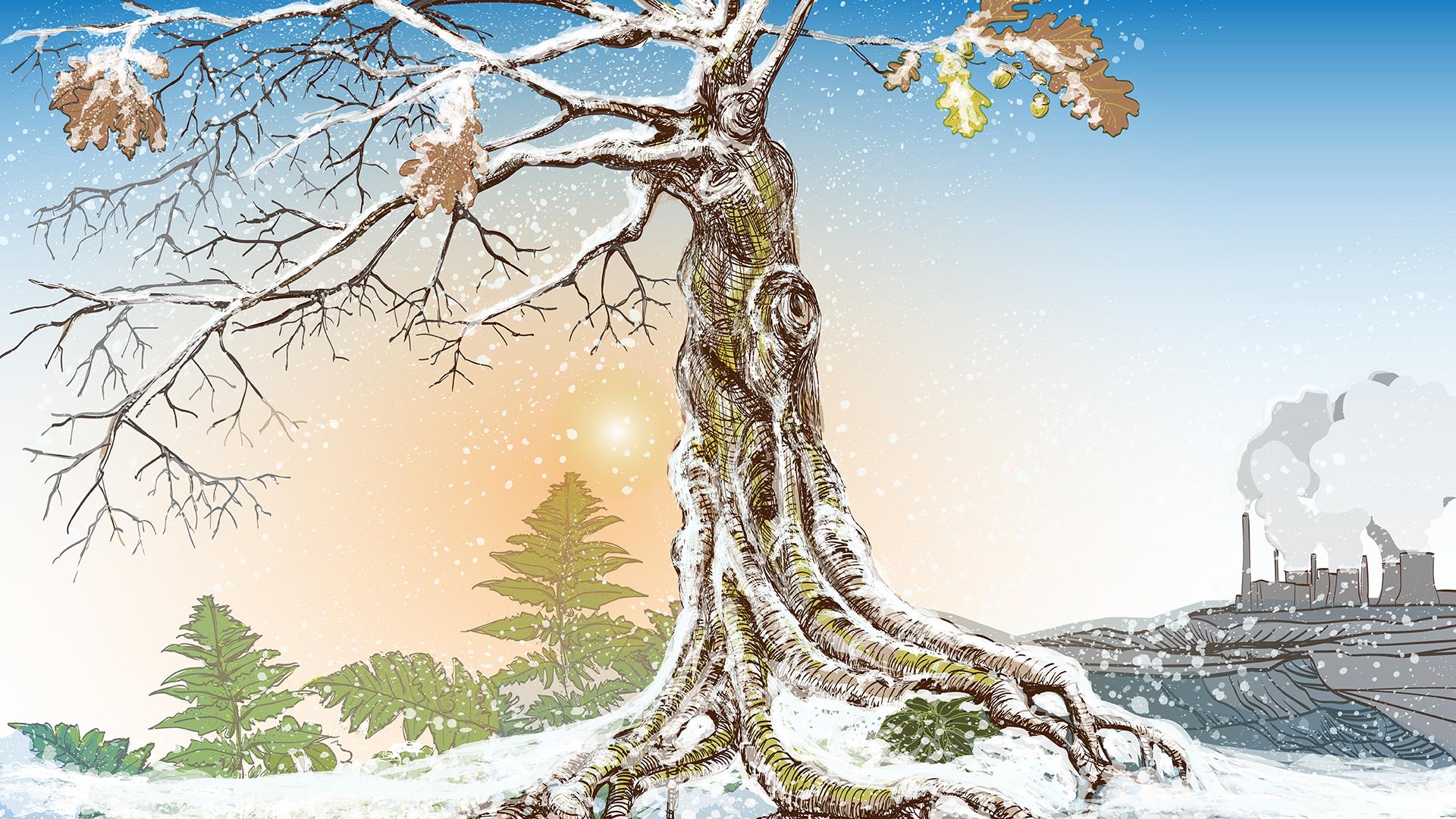 Hambacher Forst: Wintermotiv