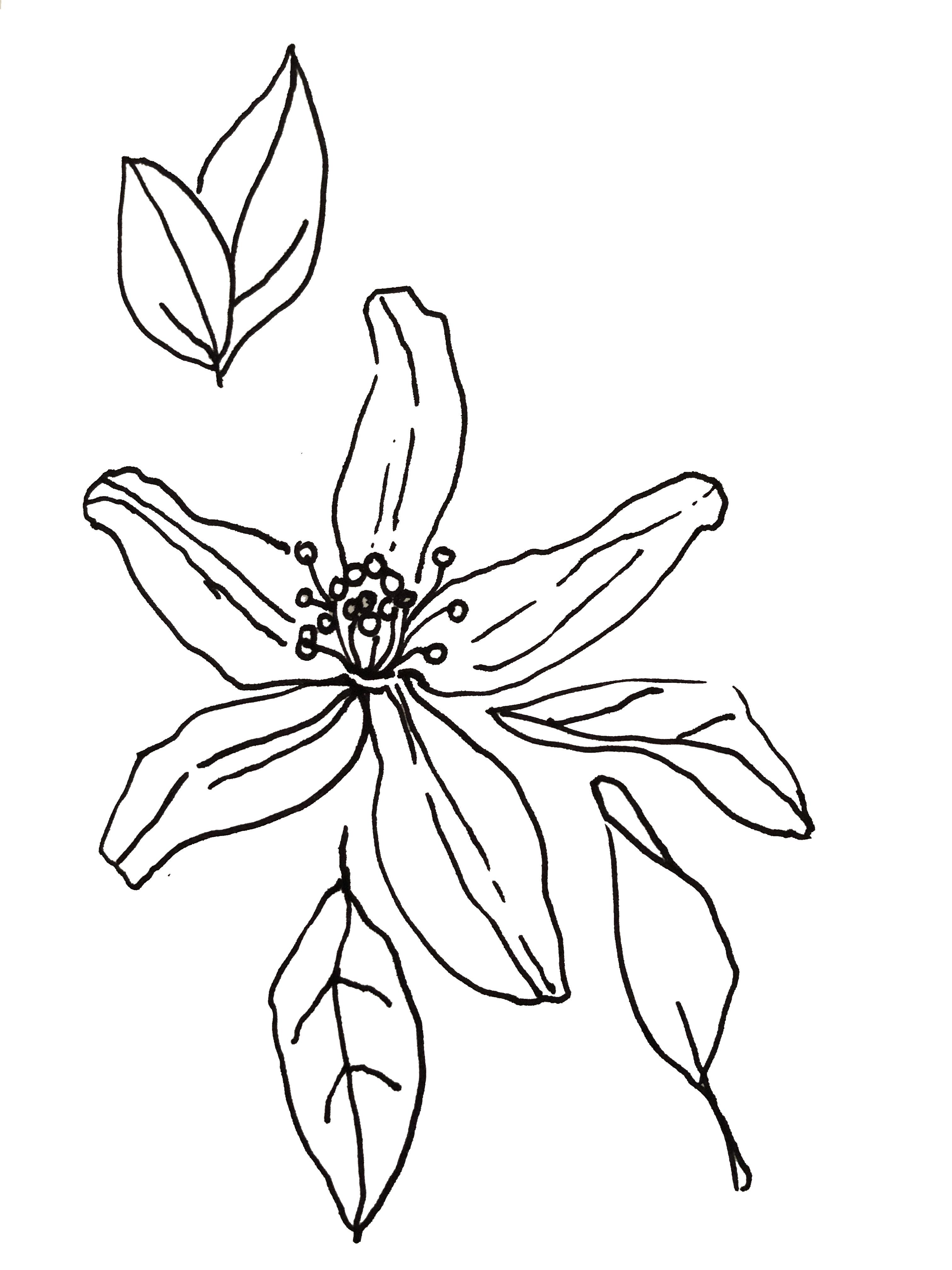 Stoffmuster: Originale Zeichnung